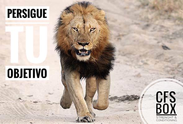 Wod CFS Box CrossFit Sevilla training persigue tu objetivo